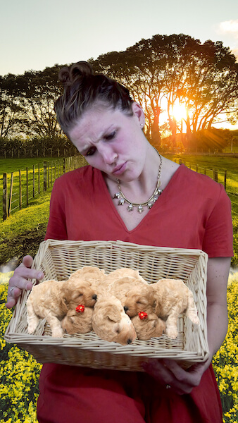 Research on the remaining tensions between two cultures after a civil war can be draining. To combat this, Dr. Megan Myers spends time with puppies. Obviously.